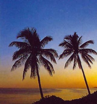 Dominican_palms
