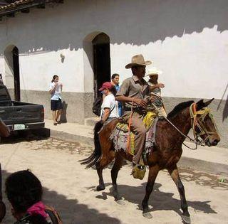 Laceiba_horse